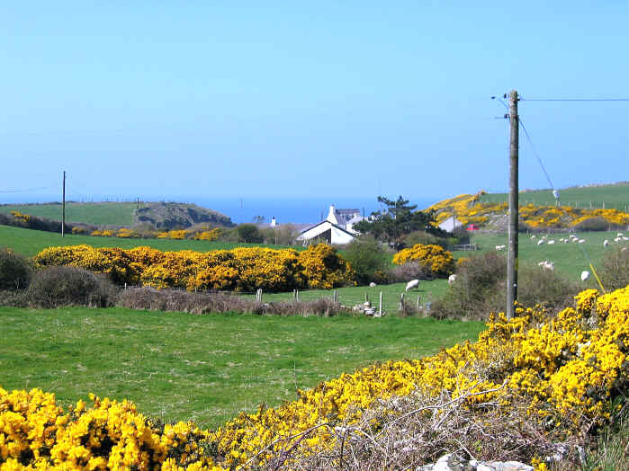 Anglesey is famous for its colourful gorse