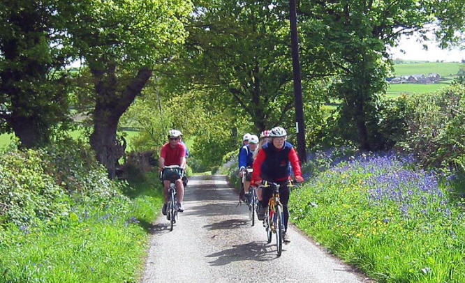 Tandem club cycling on a quiet lane through banks of bluebells